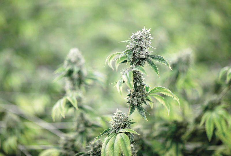 Senate Dem: Legalized pot revenue should fund drug rehab